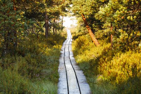 Long wooden boardwalk through pine tree forest leading into a bog in Estonia