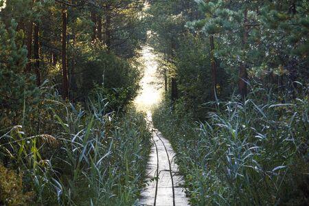 Long wooden boardwalk through forest in Estonia