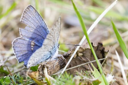 Closeup of little blue butterfly on the ground