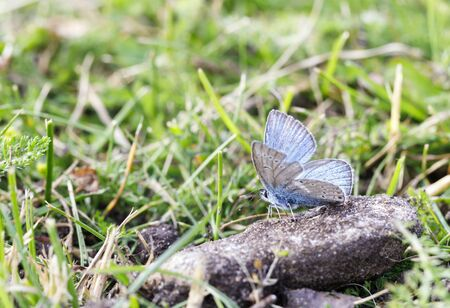 LIttle blue butterfly on a rock covered with soil Stock fotó