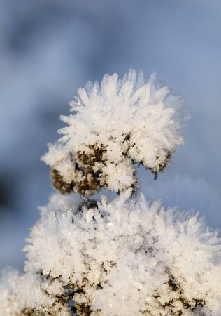 Closeuo of ice cristals on a plant at winter