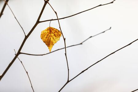 Closeup of dry golden tree leaf on a branch