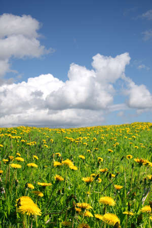 Spring field and sky  Stock Photo