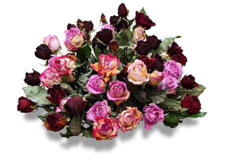 Bunch of dry red and pink roses - isolated