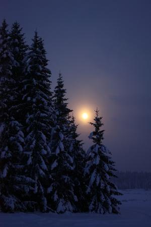 laponie: Lever de la lune dans la nuit d'hiver dans la for�t