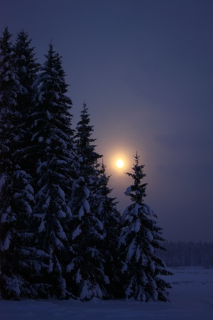 Moonrise at winter night in forest photo