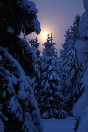 Moonrise at winter night in forest Stock Photo