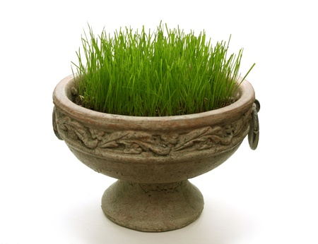 Green new grass in a pot Stock Photo