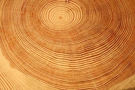 Anno anelli di un albero Archivio Fotografico