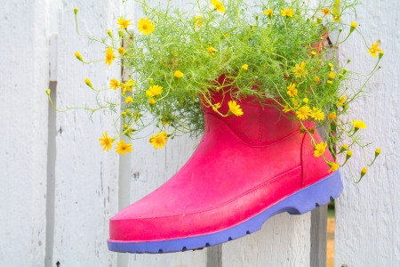 Cute flowers in boot photo