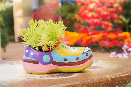 Green plants in shoe-shaped flowerpot