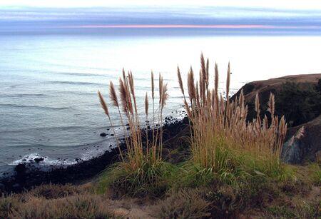 植物平和な夕日を見渡す海辺の絶壁