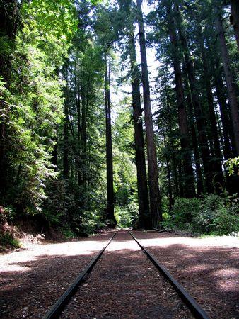 forest railroad: railroad tracks running through a bucolic forest