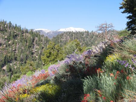 side of forest hill covered with wildflowers with top of snow-covered mountain in background photo
