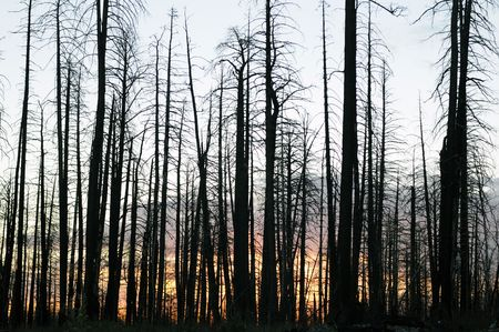 Silhouettes of burned trees against red dawn
