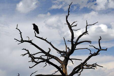 stark: raven sitting on stark tree in silhouette Stock Photo