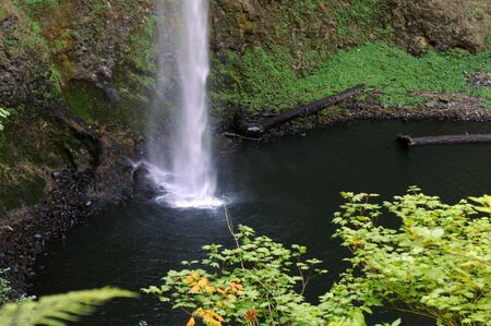 пышной листвой: tall waterfall surrounded with lush foliage