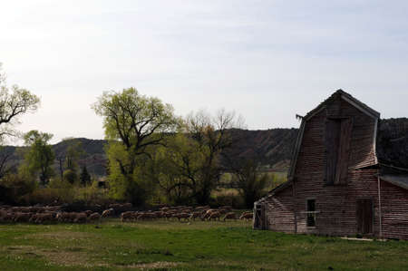 old barn on green land with sheep grazing