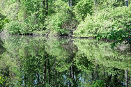 dismal: Great Dismal Swamp canal reflected in lush green