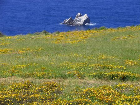 oceanic: Yellow wildflowers creeping down to oceans edge