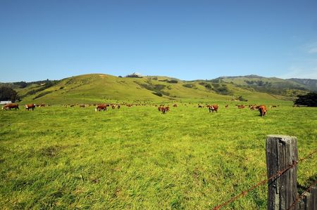 fencepost: cattle herd grazing colorful meadow with background hills
