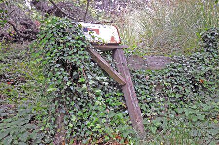 overtaken: old rustic rural mailbox overgrown with ivy, weeds