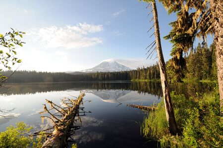 adams: mirrored lake with Mt  Adams, forest, fronted by log and greenery