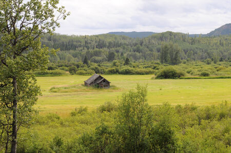 Green and yellow meadow holds rustic old cabin 版權商用圖片