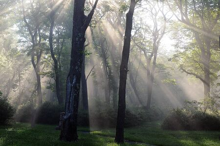 Slanted rays of sunshine breaking through a misty and foggy forest of trees, shedding light throughout the gloomy landscape.