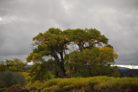 Stark trees and shrubbery changing to autumn colors with stormy clouds and mountains in background