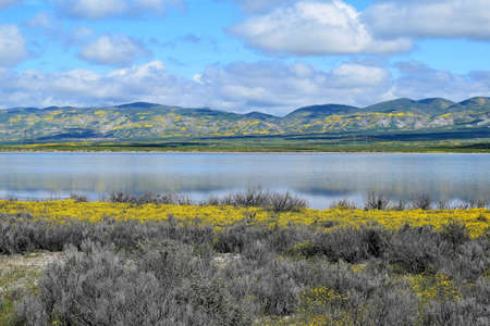 Wildflowers along shoreline of blue mirrored lake with wildflower covered mountains in background at Carrizo Plains National Monument, California. Stock Photo