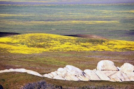 White rock formation stands out on plain of purple, orange, yellow, and blue spring wildflowers at Carrizo Plains National Monument.