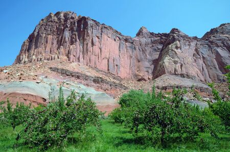Apple orchard trees with red apples and background of orange sandstone mountain at Capitol Reef, Utah