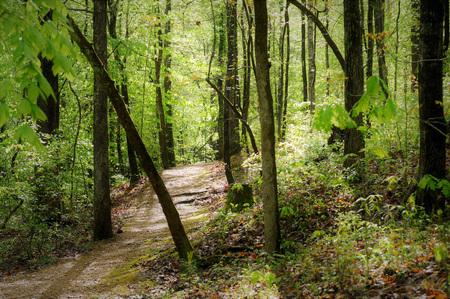 Meanderend pad door dicht bos in de buurt van Jeff Busby Campground op de Natchez Trace.