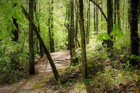 Meandering trail through dense forest near the Jeff Busby Campground on the Natchez Trace. Stock Photo