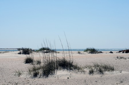 Wide and long sandy isolated beach near Moorehead, North Carolina, with sparse vegetation looks lonely.