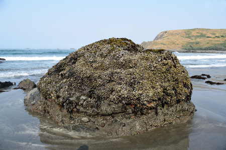Colorful barnacle covered coastal boulder along Highway 101 in Southern Oregon at low tide. Stock Photo