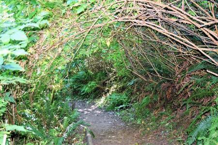 Dichte onderbossen en beboste groen meander langs de Oregon Giant Spruce Trail bij Cape Perpetua