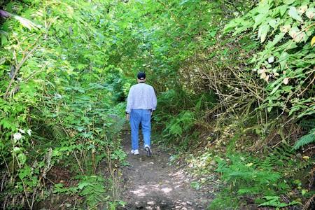 Man loopt Reuze Spruce Trail door dichte groene kust bos in Cape Perpetua, Oregon Stockfoto