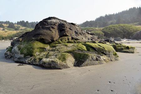 Mos behandelde kustrotsvorming in Zuidelijk Oregon met naald groen bos op achtergrond Stockfoto