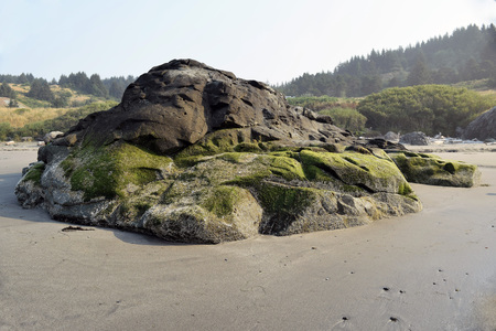 Moss covered coastal rock formation in Southern Oregon with coniferous green forest in background Stock Photo