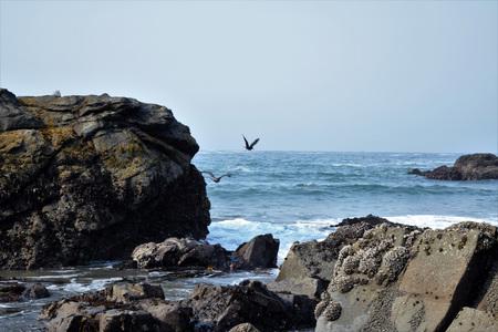 Donkere rotsachtige kustlijn langs de Oregon kust met blauwe oceaan in de achtergrond tegen de heldere hemel.