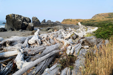 Driftwood piled on Oregon beach against hillside greenery, and rocky outcrops against blue ocean. Stock Photo