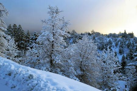 Wit wiinterwonderland met sneeuw behandeld bos van pijnboombomen op steile alpiene berg.