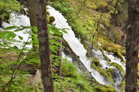 Sparkling Clearwater Falls Cascades Down Through Lush Green Forest in Oregon