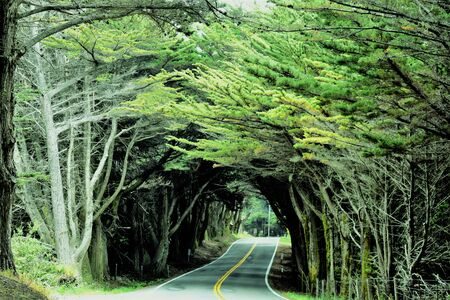 Tree Arched Road near Fort Bragg, on California Highway 1 Beach Area 写真素材