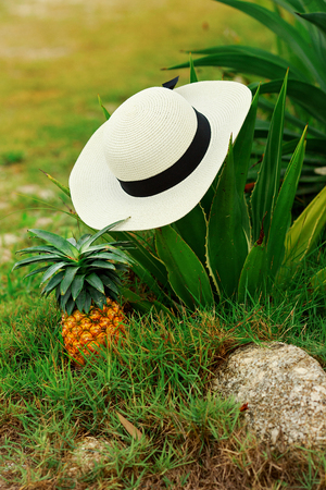 girl in hat and pineapple, female hands with pineapple
