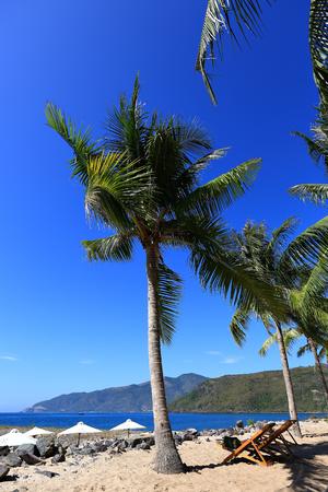 Veets, coconut palms, blue sky, sea, blue sky, rest