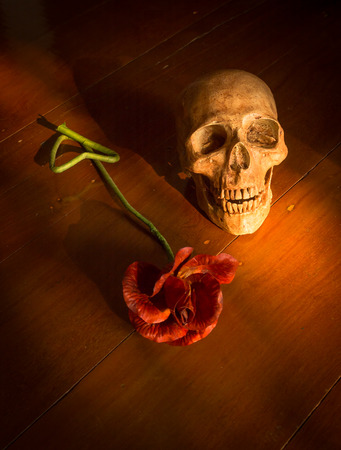 corpse flower: still life with skull and flower on wooden table