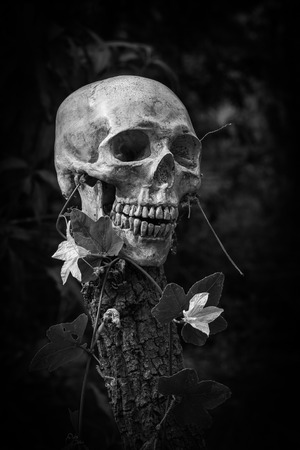 corpse flower: still life of skull and flowers on black and white